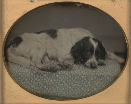 Dog owned by Sheldon Nichols -- 1852